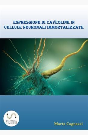Espressione di caveoline in cellule neuronali immortalizzate Marta Cagnazzi